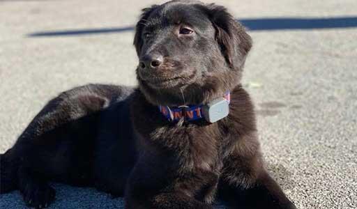 Puppy Consultation Louisville